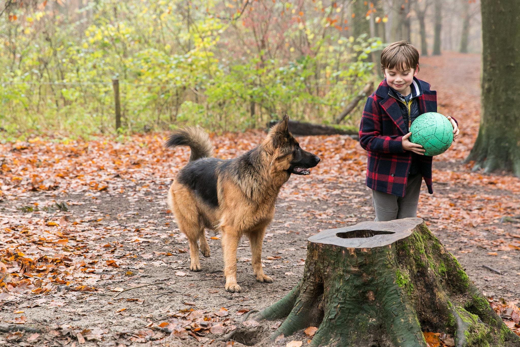Herdershond probeert bal af te pakken van jongetje