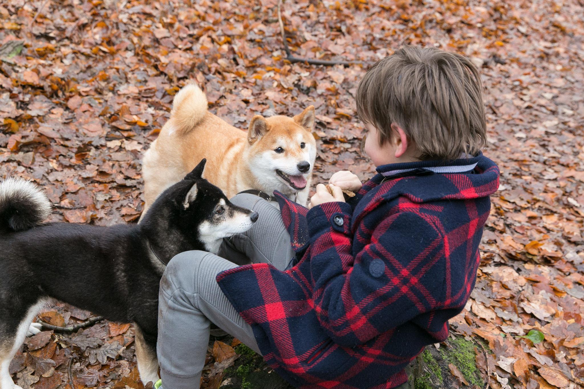 Ook de honden gaan mee tijdens een Day in the Life reportage