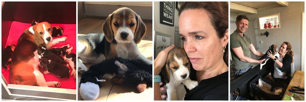 De eerste foto's van pup Bobbi de beagle